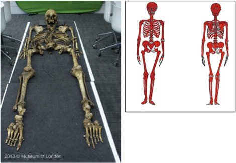 Nakhaeizadeha et al. 2014, Fig. 1 -- The skeleton used in the study.